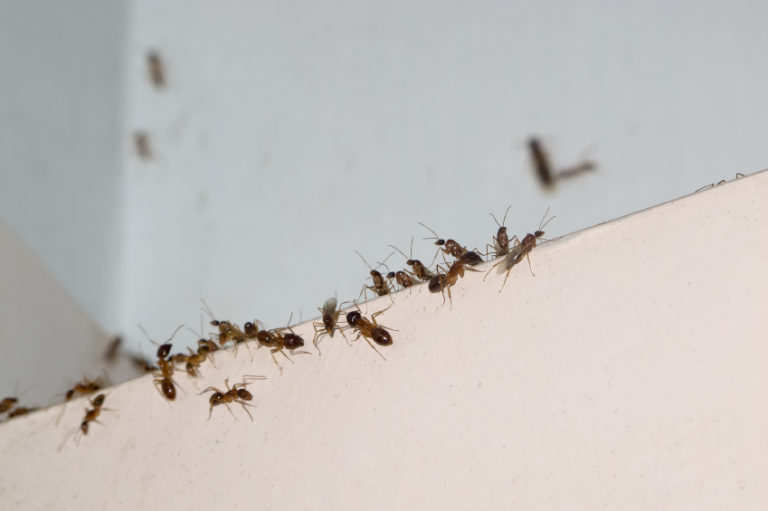 Simple Prevention Tips You Can Do Today to get Rid of Ants