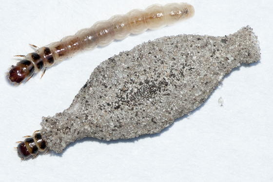 Plaster Bag Worms