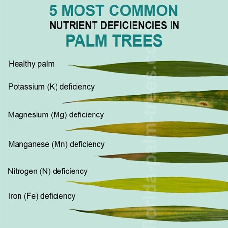 5 Signs Your Palm Trees Need Nutrients